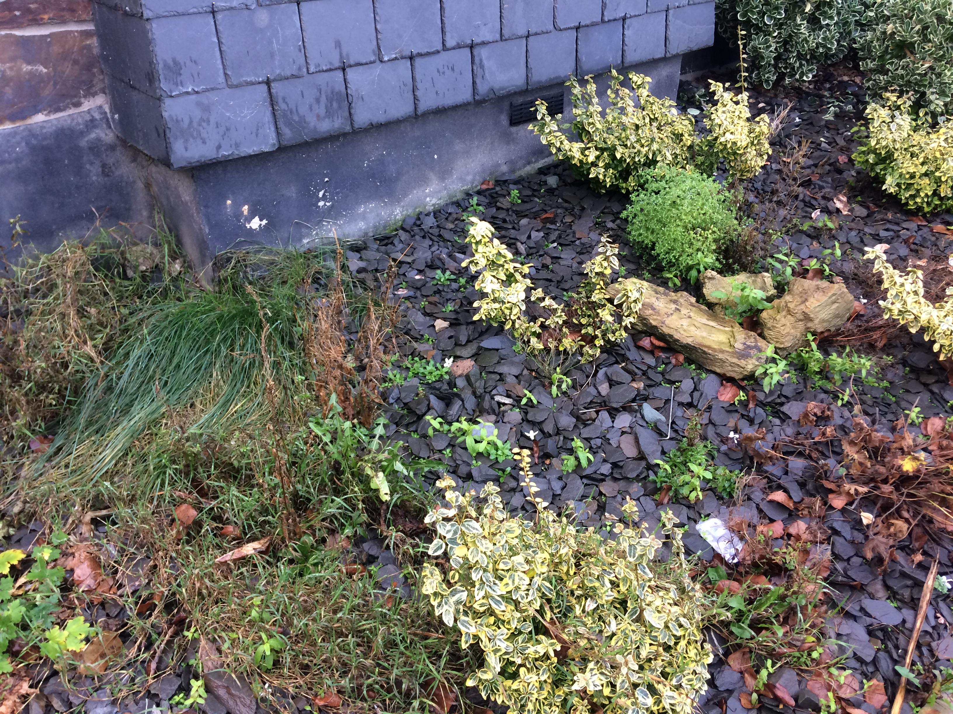 shrubsandslate1