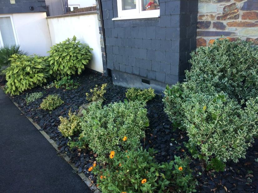 shrubsandslate3